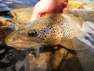 Le 7 octobre la saison de pêche 2020 s'est achevée à l'étang de Lers. On vous attend l'année prochaine pour une nouvelle saison riche en aventures !!